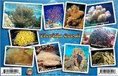 Franko Maps Coral Card Florida Coral ID Card / Coral Reef - 2017