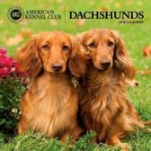 Dachshunds American Kennel Club 2018 Wall Calendar