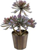 Europalms Vetplant Aeonium kunstplant, 30cm