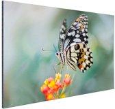 Pages vlinder op bloem Aluminium 180x120 cm - Foto print op Aluminium (metaal wanddecoratie) XXL / Groot formaat!