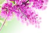 vlies photowallXL lilacs  - 158010 van ESTAhome.nl