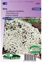 Sluis Garden Scheefbloem Groenblijvende Wit (iberis)