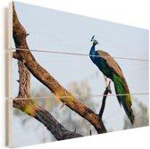 Blauwe pauw in een boom Vurenhout met planken 120x80 cm - Foto print op Hout (Wanddecoratie)