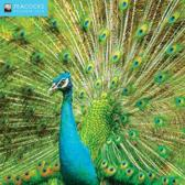 Peacocks Wall Calendar 2018 (Art Calendar)
