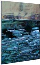 Boven en onderwater vissen Aluminium 120x180 cm - Foto print op Aluminium (metaal wanddecoratie) XXL / Groot formaat!