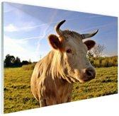 Koe in de natuur Glas 120x80 cm - Foto print op Glas (Plexiglas wanddecoratie)