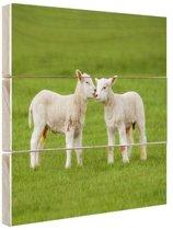 FotoCadeau.nl - Lammetjes in de wei Hout 30x20 cm - Foto print op Hout (Wanddecoratie)