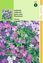 2 stuks Hortitops Aubrietia Hybrida Grandiflora Gemengd