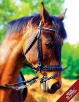 Horse Notebook Collection