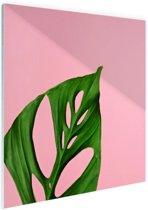 Botanisch blad op roze Glas 50x50 cm - Foto print op Glas (Plexiglas wanddecoratie)