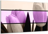 Glasschilderij Tulp | Paars, Grijs, Zwart | 120x70cm 1Luik | Foto print op Glas |  F004482