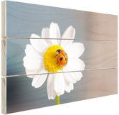 Lieveheersbeestje op een madeliefje Hout 120x80 cm - Foto print op Hout (Wanddecoratie)