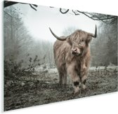 Schotse hooglander in de herfst Plexiglas 80x60 cm - Foto print op Glas (Plexiglas wanddecoratie)