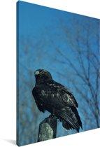 Zwarte ruigpootbuizerd op een tak Canvas 80x120 cm - Foto print op Canvas schilderij (Wanddecoratie woonkamer / slaapkamer)