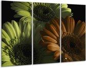 Glasschilderij Bloem | Bruin, Groen | 120x80cm 3Luik | Foto print op Glas |  F002525