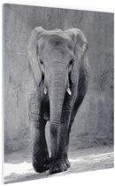 FotoCadeau.nl - Olifant zwart-wit gecentreerd Glas 60x90 cm - Foto print op Glas (Plexiglas wanddecoratie)