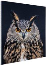 Oehoe portret Aluminium 40x60 cm - Foto print op Aluminium (metaal wanddecoratie)