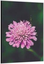 Dibond –Roze Bloem– 80x120cm Foto op Aluminium (Wanddecoratie van metaal)