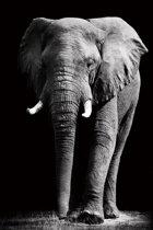 Canvas Schilderij * Olifant Zwart Wit  * - Kunst aan je Muur - Realistisch - ZwartWit - 50 x 70 cm