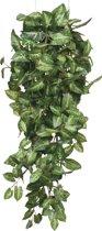 Mica Decorations - Fittonia Hangend - Groen