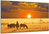 Glasschilderij Zebra | Geel, Oranje, Wit | 120x70cm 1Luik | Foto print op Glas |  F002618