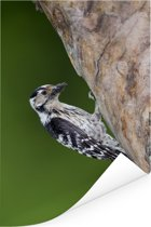 Kleine bonte specht in de boom Poster 80x120 cm - Foto print op Poster (wanddecoratie woonkamer / slaapkamer)