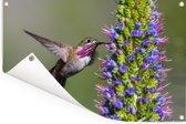 Een calliope kolibrie naast een bloem Tuinposter 180x120 cm - Tuindoek / Buitencanvas / Schilderijen voor buiten (tuin decoratie) XXL / Groot formaat!