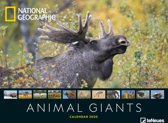 Animal Giants National Geographic Posterkalender 2020