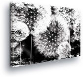 Dandelion Black White Canvas Print 100cm x 75cm