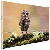 Kleine uil Hout 120x80 cm - Foto print op Hout (Wanddecoratie)