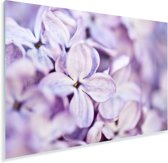 Close up van lavendel bloemen Plexiglas 90x60 cm - Foto print op Glas (Plexiglas wanddecoratie)