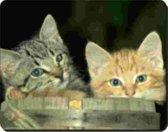 2 Kittens   Muismat