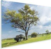 Safaritruck onder unieke boom in de Okavangodelta Plexiglas 90x60 cm - Foto print op Glas (Plexiglas wanddecoratie)