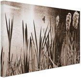 Wilde eend in een vijver sepia  Canvas 60x40 cm - Foto print op Canvas schilderij (Wanddecoratie)