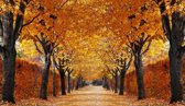 Papermoon Autumn Alley Vlies Fotobehang 200x149cm 4-Banen