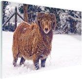 Bruin Ram in de sneeuw Glas 180x120 cm - Foto print op Glas (Plexiglas wanddecoratie) XXL / Groot formaat!