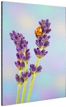 Lieveheersbeestje op lavendelbloem Aluminium 60x90 cm - Foto print op Aluminium (metaal wanddecoratie)