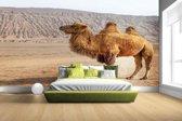 Staande kameel in China Fotobehang 380x265