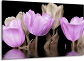 Canvas schilderij Tulpen | Paars, Grijs | 140x90cm 1Luik