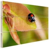 FotoCadeau.nl - Zwart rood lieveheersbeestje Hout 30x20 cm - Foto print op Hout (Wanddecoratie)