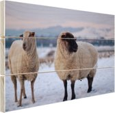 Twee schapen in de sneeuw Hout 160x120 cm - Foto print op Hout (Wanddecoratie) XXL / Groot formaat!