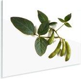 Sojabonen tegen een witte achtergrond Plexiglas 40x30 cm - klein - Foto print op Glas (Plexiglas wanddecoratie)