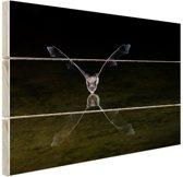 Vleermuis boven water Hout 80x60 cm - Foto print op Hout (Wanddecoratie)
