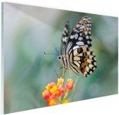 Pages vlinder op bloem Glas 90x60 cm - Foto print op Glas (Plexiglas wanddecoratie)