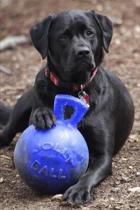 2020 Weekly Planner Black Labrador Retriever Dog Poses Favorite Toy 134 Pages: 2020 Planners Calendars Organizers Datebooks Appointment Books Agendas