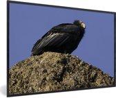 Foto in lijst - Een Californische condor op een rots met blauwe achtergrond fotolijst zwart 60x40 cm - Poster in lijst (Wanddecoratie woonkamer / slaapkamer)