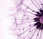 Fotobehang Dandelion | XXXL - 416cm x 254cm | 130g/m2 Vlies
