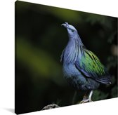 Kleurrijke palawanpauwfazant Canvas 160x120 cm - Foto print op Canvas schilderij (Wanddecoratie woonkamer / slaapkamer) XXL / Groot formaat!