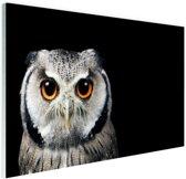Close-up uil Glas 90x60 cm - Foto print op Glas (Plexiglas wanddecoratie)