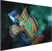 Veelkleurige vis Aluminium 90x60 cm - Foto print op Aluminium (metaal wanddecoratie)